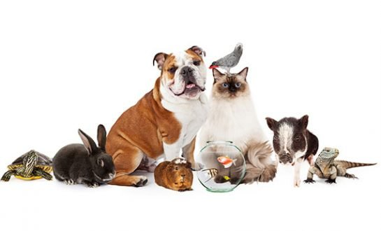 A range of tenants pets featuring dogs and cats.