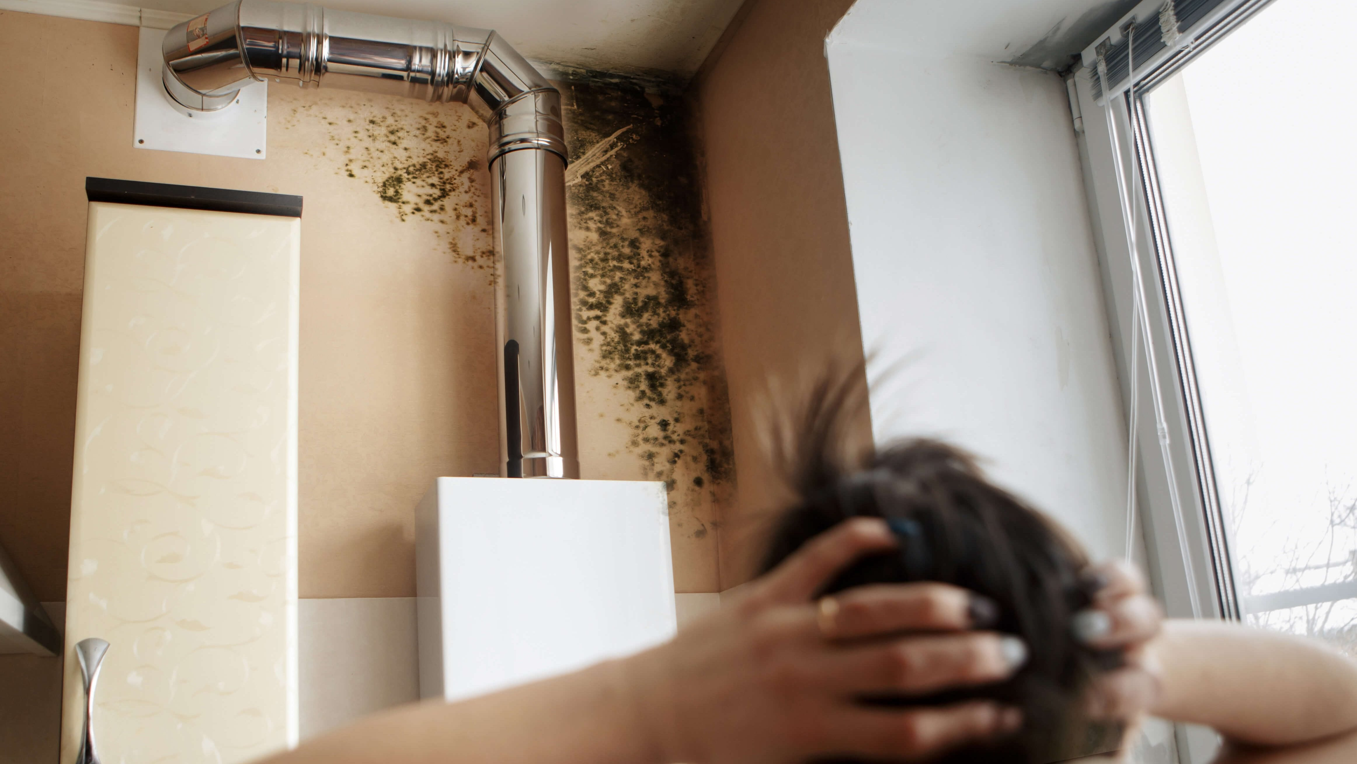 Mould In A Rental Property – Who's Responsible?