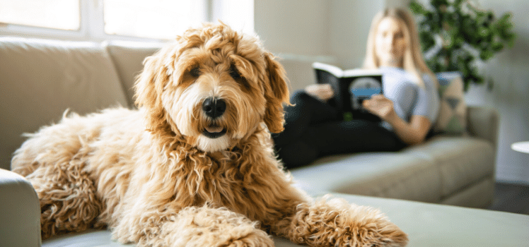 woman renting with pets on sofa with her dog